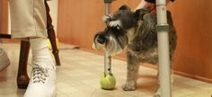 Pets Forever Program Pairs Elderly With Veterinary Students For Animal Care