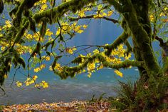 View the latest professional photos and fine art from the Art Wolfe Gallery Art Wolfe, Olympic Peninsula, Pacific Northwest, Fine Art Photography, Poster Size Prints, Olympics, Photo Wall Art, Photo Puzzle, Washington Usa
