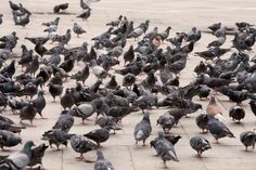 Accidentally finding yourself in the middle of a flock of pigeons and you are holding A BAGUETTE. | 27 Things You're Only Afraid Of If You Live In New York