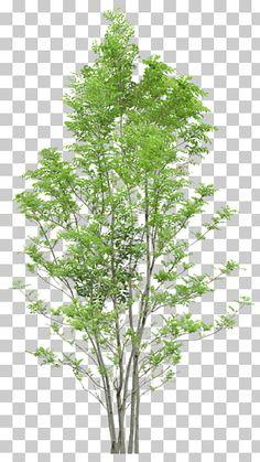 Blur Photo Background, Dslr Background Images, Picsart Background, Green Trees, Green Leaves, Flower Png Images, Botany Illustration, Tree Photoshop, Autumn Leaf Color