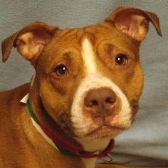 3 / 15     Petango.com – Meet Eddie - Video - Get Lucky!, a 1 year Terrier, American Pit Bull / Mix available for adoption in SAUKVILLE, WI Contact Information Address  630 W Dekora Street, SAUKVILLE, WI, 53080  Phone  (262) 377-7580  Website  http://www.ozaukeehumane.org  Email  info@ozaukeehumane.org