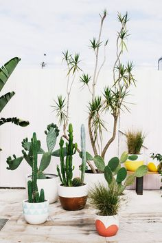 How good are these painted planters from Australian design duo Poppy Lane and Scott Gibson? Chic potsare not easy to find - especially sizable ones, big enough for large plants. So you can imagine my excitement upon discovering this colorful, graphic collection. The only foreseeable issue is