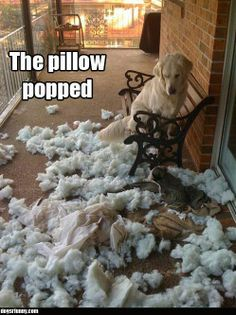 Exactly why my dog and my patio chair pads can not be left alone!