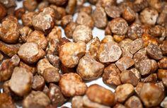 Oregon white truffles