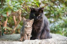 田代島猫景色 (続編44) にゃん博・にゃんフォト開催のお知らせ : Cats in Town Blog