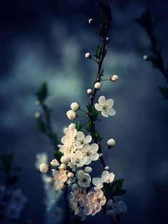 Flower Wallpaper, Nature Wallpaper, Wallpaper Backgrounds, Image Nature, Nature Nature, Ikebana, Nature Pictures, Belle Photo, Pretty Pictures