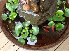 Comet goldfish in my cast iron kettle pond