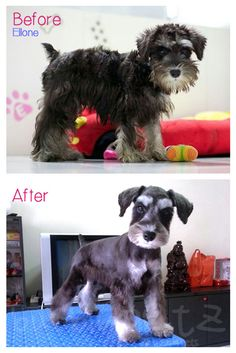 Ellone's first grooming!