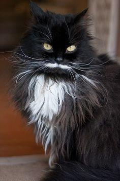 fine moustache