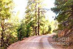 THE OLD DIRT ROAD.  Impressionism was a 19th-century art movement which began in Paris.  This impressionistic winding road leads up the Bill Williams Mountain in Williams, Arizona and fills the heart with utter joy at its sheer beauty and clean air.  This artwork now available at www.BeautyForGod.com
