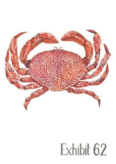 A3 illustrated crab print, limited edition 500. Stephanie Cole DESIGN