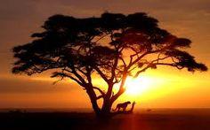 Afbeeldingsresultaat voor savanne wallpaper
