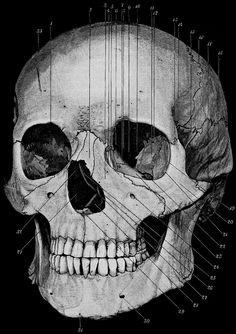 Handbook of Human Anatomy, 1896
