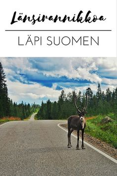 If you haven't yet fallen in love with Finland, read on! The highlights of my coastal road trip through Finland—all the way from South to North and back! Responsible Travel, Ultimate Travel, Live In The Now, Countries Of The World, Finland, Travel Inspiration, Cool Pictures, Coastal, Moose Art