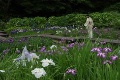 This garden will be in bloom in June and July: Utatsuyama Iris Garden, Kanazawa, Ishikawa pref. Photo by Gen Minamishima. Cultural Capital, Iris Garden, Kanazawa, Ishikawa, And July, Japanese Gardens, Places To Go, Contemporary Art, June