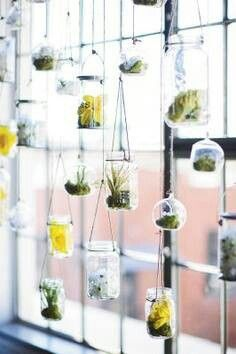 Hanging plants from jars next to a nicely lit window! #jars #gardening #plants    http://www.thecarystore.com/containers-categories/packaging-and-containers-glass-jars-and-bottles