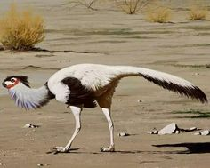 """A new publication on the bird-like dinosaurAvimimus, from the late-Cretaceous suggests they were gregarious, social animals -- evidence that flies in the face of the long-held mysticism surrounding dinosaurs as solo creatures.  """"The common mythology of dinosaurs depicts solitary, vicious monsters running around eating everything,"""" explains Gregory Funston, PhD student and Vanier scholar at the University of Alberta"""