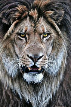 Draw Cats Original Lion Paintings - Alan M Hunt Wildlife Artist UK Animals And Pets, Cute Animals, Wild Animals, Baby Animals, Lion Love, Lion Painting, Lion Wallpaper, Lion Art, Tier Fotos
