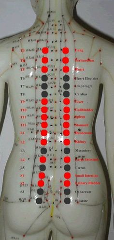 new acquisition in back-shu points anatomy knowledge