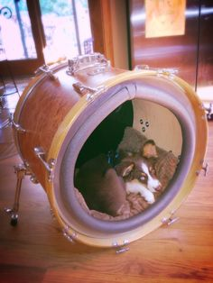 Up-cycled bass drum dog bed. BOOM!