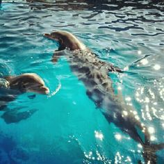 Dolphins are the best