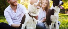 Couples In Love, Romantic Couples, Oils For Dogs, Dog Information, Dog Facts, Romantic Dates, Dog Photos, Dog Lovers, Puppies