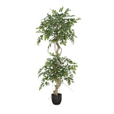 This 5' artificial ficus with colorful green leaves, gracefully contributes in implementing the concept of artificial plant decoration. Easy to maintain and superbly made, this artificial ficus will be a real asset and will enhance your interior spaces. Ficus Tree, Green Plants, Artificial Plants, Plant Decor, Green Leaves, Decoration, Houseplants, Indoor Plants, Concept