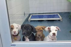 Dallas Animal Services and Adoption Center Who wanted a puppy? We got 'em - we have nearly 100 puppies <1 year old ready for adoption. Come and get them! Only $30 and that includes spay or neuter, vaccination AND microchip! Best selection anywhere and best deal in town! We're open until 5 p.m so hurry! 1818 N. Westmoreland, Dallas, 75212. www.facebook.com/photo.php?fbid=476327555769853=a.106612369408042.9639.101535076582438=1=nf