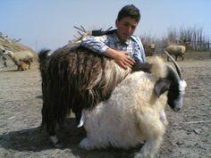 عشایر مغان و سبلان
