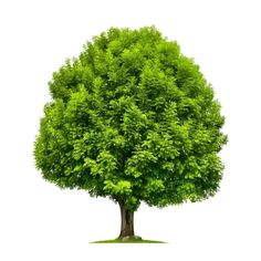 Types Of Trees 101 [All You Need To Know]