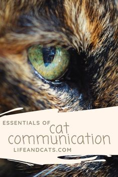 Cat Nutrition Health Body language, sensory input/output and vocalization are primary means of cat communication. Not the language of dogs. You have to negotiate to train a cat. I Love Cats, Cool Cats, First Time Cat Owner, Cat Nutrition, Mean Cat, Kitten Care, Cat Behavior, Cat Colors, Cat Grooming
