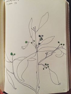 ellsworth kelly plant drawings book - Google Search