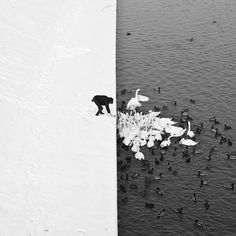 This could quite possibly be the best photograph ever taken. Ever. Polish photographer Marcin Ryczek snapped this once-in-a-lifetime shot of a man feeding swans and ducks from a snowy river bank in Krakow. The trifecta juxtaposition between black/white, water/snow, and person/animals is simply astounding.