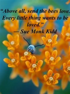 """""""Above all, send the bees love. Every little thing wants to be loved.""""  ― Sue Monk Kidd"""