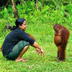 Orangutan Pout - I absolutely love Orangutans! Especially babies.