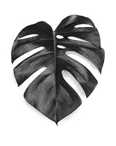 #monstera #monsteradeliciosa #monsteraposter #monsteraprint #monsteraart #monsteraleaf #leaf #poster #wallart #botanicalart #botanicart #botanical #art #trend #blackandwhite #scandinavian