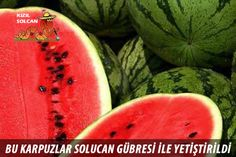 How to Pick a Watermelon - Amore & Vita - Shay Mitchell and Michaela Blaney Growing Vegetables From Seeds, Easy Vegetables To Grow, Growing Seeds, Fresh Vegetables, Veggies, How To Grow Watermelon, Sweet Watermelon, Best Weight Loss Foods, Weight Loss Meal Plan
