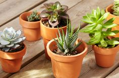 Learn all about succulents - the hardy plant that's great indoors or outdoors!