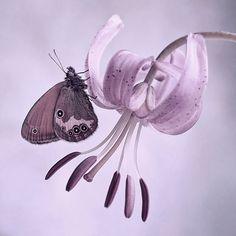 purple butterfly by Dorota Krauze, via Soft Purple, Purple Rain, Shades Of Purple, Purple Colors, Pastel Colors, Papillon Butterfly, Butterfly Kisses, Purple Butterfly, Malva