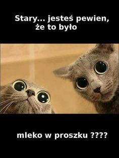 Pozdro dla kumatych Funny Images, Funny Photos, Animals And Pets, Funny Animals, Polish Memes, Weekend Humor, Funny Mems, Happy Photos, Man Humor