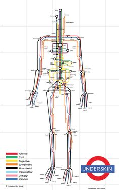 Human Subway is an interesting take on the human body as a subway system, based upon the London Tube. Systems portrayed include arterial, CNS, digestive, lymphatic, musculature, respiratory, urinary and venous. Although not entirely accurate, it provides an interesting way to learn these systems and provides a great image for the wall. Repinned by SOS Inc. Resources http://pinterest.com/sostherapy.