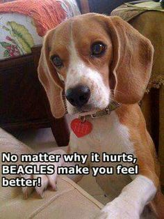 Beagles help