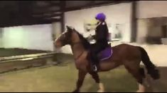 March 2020 Back out for Friday Night Lights. Harry is in training for the Interschools National Final in April which he qualified for on his first . Friday Night Lights, Irish Traditions, Show Jumping, Horses, Pets, Animals, Animaux, Horse, Animal