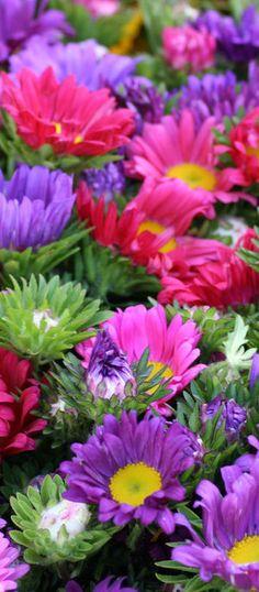 Colorful Flowers – Farmers Market San Francisco