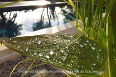 The natural beauty of Pingplalee Resort Kanchanaburi. Vallee Asachai's photo.