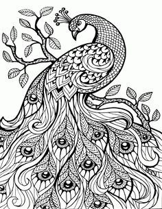 Adult Coloring Book Pages Free Printable Coloring Pages For Adults Only Image 36 Art Peacock Coloring Pages, Flower Coloring Pages, Mandala Coloring Pages, Animal Coloring Pages, Fairy Coloring, Quote Coloring Pages, Printable Adult Coloring Pages, Cool Coloring Pages, Coloring Books