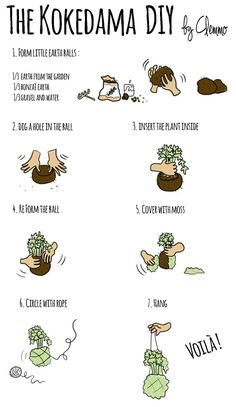 Kokedama - Hanging plants on moss ball - DIY by Clemmo Around the World. Click to see the pictures ;):