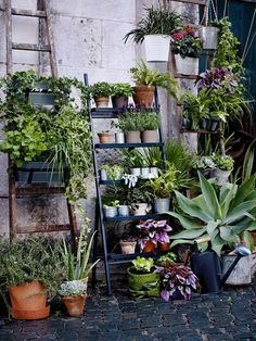 Une échelle et des jardinières suspendues pour fleurir son balcon