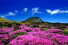 Jeju Island, Korea  Happy summer solstice!