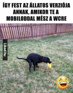 Funny Animals, Funny Jokes, Haha, Funny Pictures, Schmuck, Fanny Pics, Husky Jokes, Ha Ha, Funny Pics